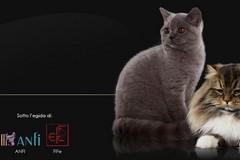 Al Palaflorio l'ottava edizione dell'esposizione felina