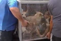 Cani sequestrati a Palo del Colle, l'appello di Enpa Bari:«Aiutateci»