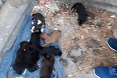 Brutta scoperta in piazza Garibaldi, abbandonati 8 cuccioli