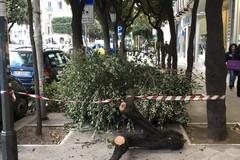 Forte vento su Bari, cade un albero in corso Cavour. Nessun ferito