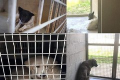 Cagne accalappiate a Bari, Lav ed Enpa: «Aiutateci ad aiutarle»