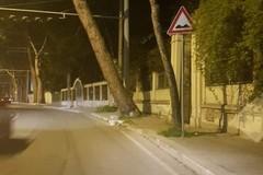 Bari, albero inclinato in corso De Gasperi