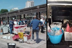 Retata sul molo San Nicola, sequestrato pesce mal conservato. Multe per 33mila euro