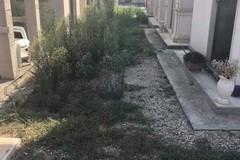 """Carbonara di Bari, i viali del cimitero sono una """"giungla"""""""