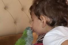 Bari, Alex il pappagallo smarrito a Carbonara