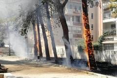 Casamassima, ignoti appiccano fuoco agli alberi in villa