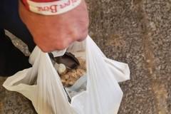Richiesta buoni spesa, oltre 9mila domande arrivate al Comune di Bari