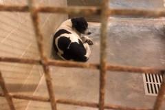 """""""Liberiamo Willy"""", accalappiato il cane di Sant'Anna il quartiere si mobilita"""