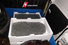 Viaggia sulla tangenziale di Bari con 200 chili di pescato illegale, scatta la multa