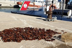 Sequestro datteri di mare