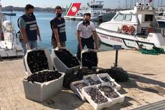 Provincia di Bari, giro di vite contro il commercio di pesce illegale. Scatta il maxi sequestro