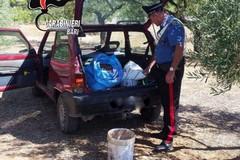 Criminalità nelle campagne, Coldiretti Puglia: «Allarme furti di mandorle»