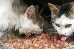 «Aiutateci, dobbiamo salvare 100 gatti», l'appello del canile di Bari