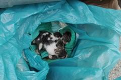Poggiofranco, quattro gattini neonati gettati nel cassonetto