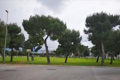 Catino, pubblicata gara per la riqualificazione del giardino Peppino Impastato