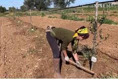 In Puglia i giovani tornano in campagna, oltre 3mila imprese agricole guidate da under 35