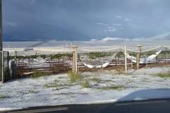 Agricoltura in Puglia messa in ginocchio dal maltempo. Regione: «Al lavoro per verificare danni»