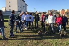 Bari, al San Paolo un terreno abbandonato diventa un bosco sociale