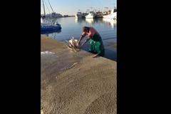 """Bari, il pescatore """"arriccia"""" il polpo e gli animalisti insorgono"""
