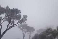 Vento e neve sulla Puglia, allerta gialla della Protezione Civile