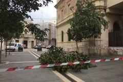 Cade un albero davanti alla scuola Balilla