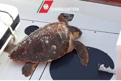 Ancora tartarughe spiaggiate, una a Bari e una a Monopoli