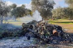 Gestivano rifiuti senza autorizzazione, quattro denunce alle porte di Bari