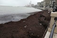 Bari, alghe sul molo San Nicola. Domani l'intervento di Amiu