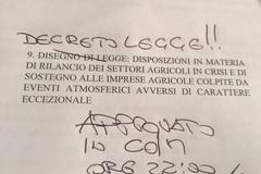 Xylella, Centinaio mantiene le promesse: approvato decreto legge