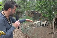 Palo del Colle, in campagna con decine di cani in gabbia