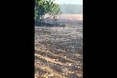 Uno degli incendi di sabato 6 luglio