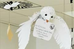 Bari, rubata la civetta Edvige dall'ambulatorio dei bambini