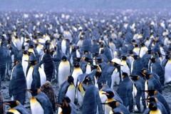 Da Bari arriva la risposta alle Sardine, ecco il gruppo dei Pinguini