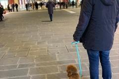 """Ninodangelo, il cane di """"Il mio viaggio a New York"""", avvistato a Bari"""
