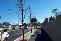Bari, in via Amendola spuntano i primi alberi