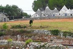 Pantera nelle campagne di Bari, il vademecum per evitare problemi