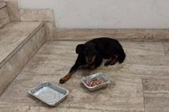 Cane rubato con il camper a Bari, recuperato e restituito alla famiglia