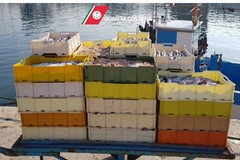 Controlli a tappeto della Guardia Costiera, sequestrata una tonnellata di pesce in Puglia