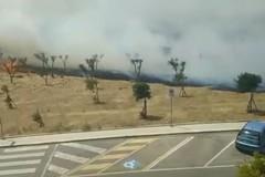 Bari, sterpaglie prendono fuoco nel quartiere Sant'Anna: residenti esasperati
