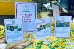"""In Puglia è invasione di insetti """"alieni"""", Coldiretti: «Colpa del clima tropicale»"""