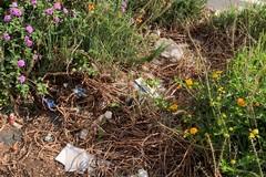 Giornata mondiale dell'ambiente, le azioni di guerrilla gardening di BariEcoCity