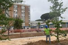 Ospedale pediatrico di Bari, ripresi i lavori per le tre nuove aree verdi