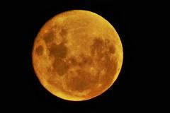 Eclissi totale di luna, anche a Bari occhi puntati in cielo venerdì prossimo