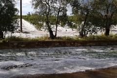 Violenta grandinata nelle campagne di Bari, colpiti gli oliveti