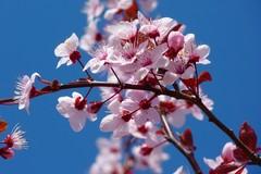 Finta primavera in Puglia, l'allarme di Coldiretti: «Rischio shock termico»