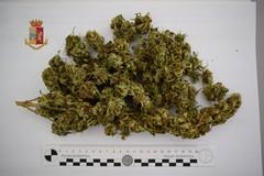Monopoli, produce in soffitta marijuana per lo spaccio. Denunciato 34enne