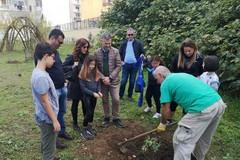 Parco Gargasole compie tre anni, Decaro: «Luogo speciale curato dai cittadini»