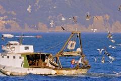 """Come educare i pescatori alla sicurezza in mare. Tutti i numeri del progetto """"Pesca sicura"""""""