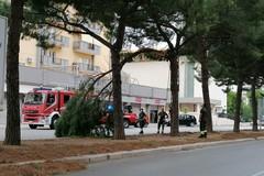 Bari, cade un grosso ramo in via Caldarola per il forte vento