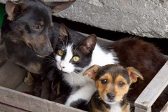 Legge sul randagismo, Puglia tutela chi si prende cura di cani e gatti